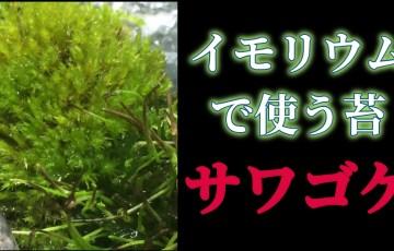 イモリウムで使う苔