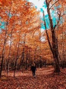 walk through forest during fall. orange leaves. girl walking. blue sky.