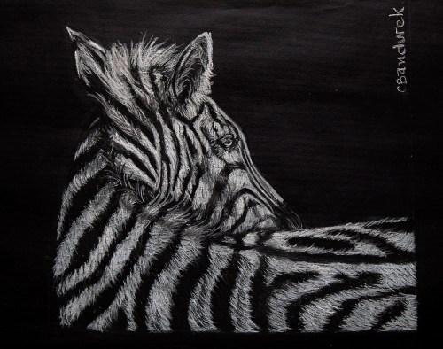 Zebra - Chalk pastel - Cynthia Bandurek