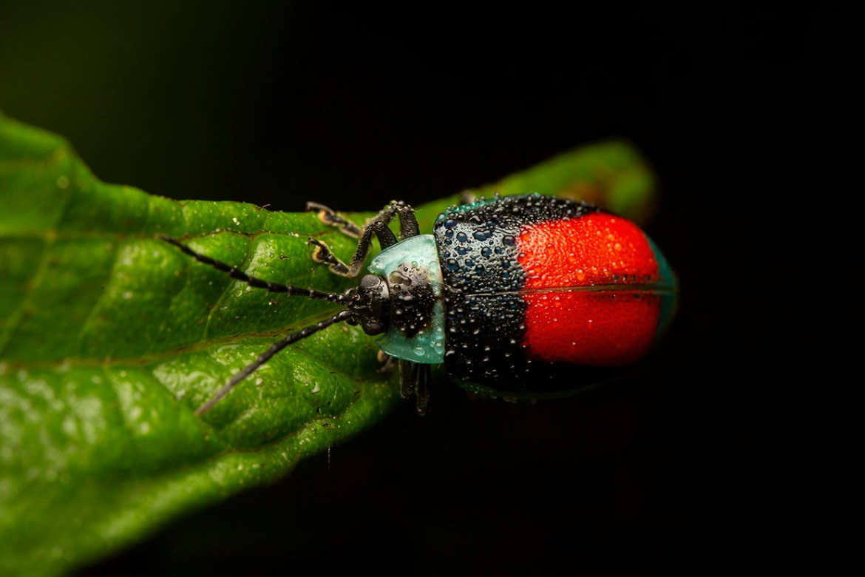 Beetle - Cynthia Bandurek