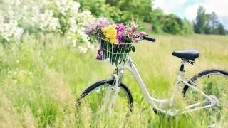 草原の中で籠に鼻をいっぱい詰めて停まる自転車