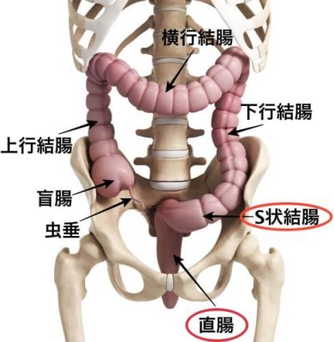 S状結腸 直腸