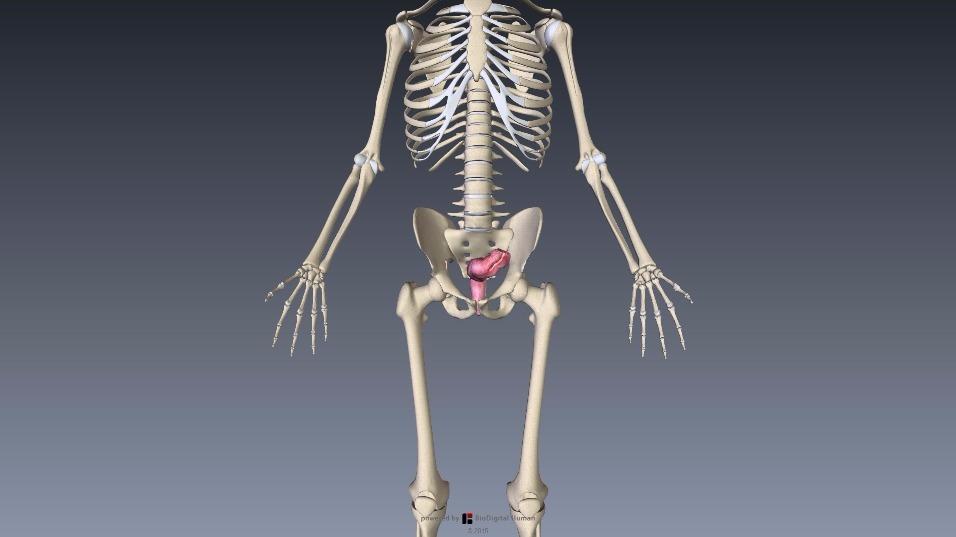 S字結腸 直腸