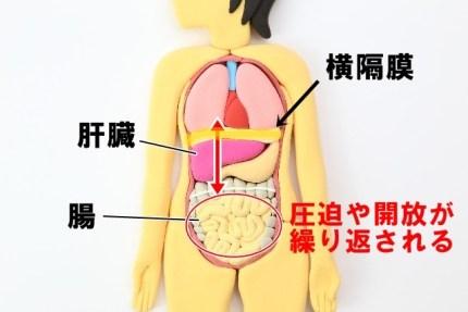 腸もみ 深呼吸 横隔膜