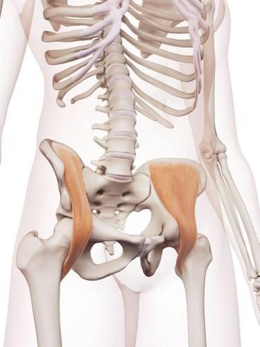 骨盤 位置 図 腸骨筋