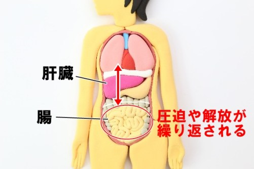 肝臓と腸 便秘改善