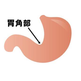 胃角部 位置 働き
