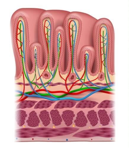 胃の場所 粘膜