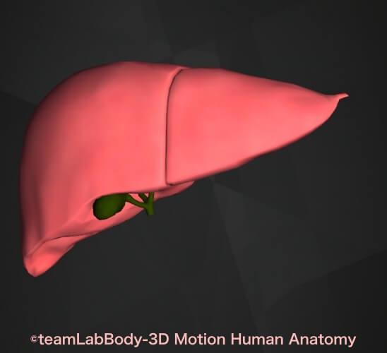 胆汁色 緑 肝臓 胆嚢