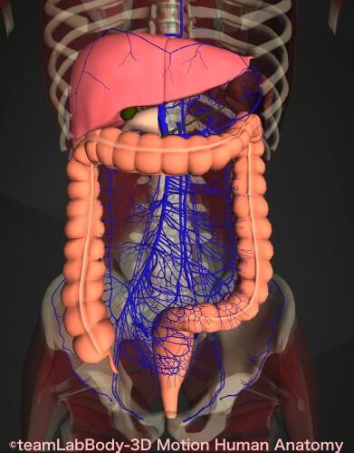 腹水が溜まる病気 症状 門脈