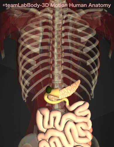 うんち白い 便白色 胆のう 十二指腸 膵臓