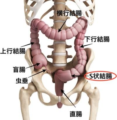腸痛み原因 右腹部、左腹部、中央対応法診断 S状結腸