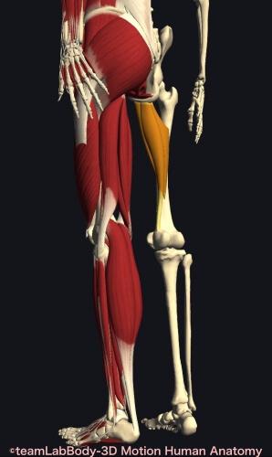 ウォーキング 筋肉痛 内転筋