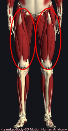 ウォーキング 筋肉痛 大腿四頭筋