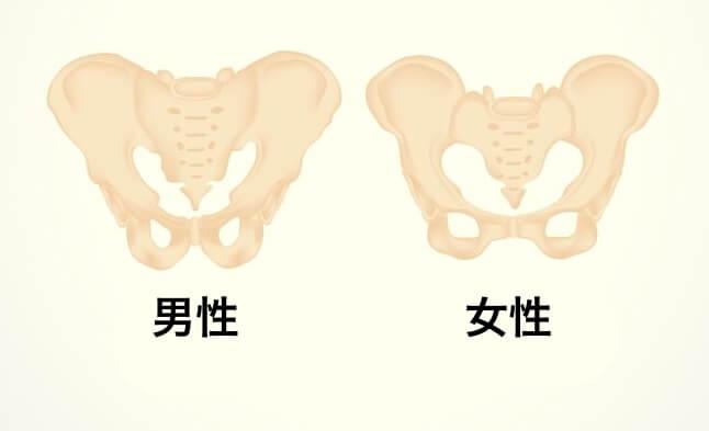 骨盤を立てるのはダメ 男女の骨盤の違い