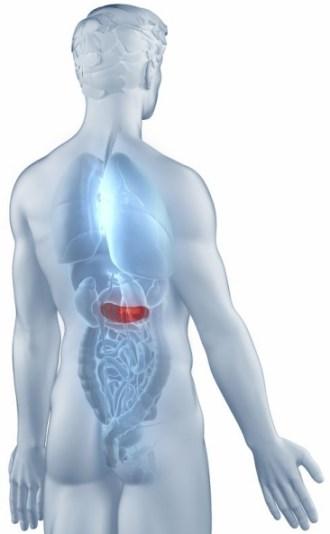 背中の痛み 膵臓 膵炎 膵臓癌