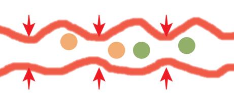腸の運動 分節運動 輪走筋