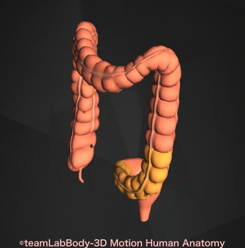 S字結腸場所図