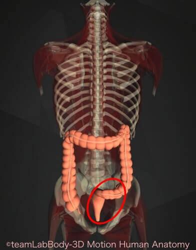 おならがよく出る病気 S状結腸 直腸