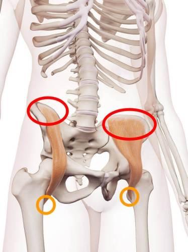 股関節固い腸骨筋起始停止