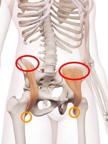 便秘解消ストレッチ 腸骨筋 付着部