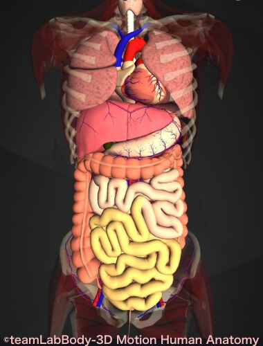 消化管 機能 構造 回