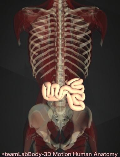 空腸 位置 図 働き