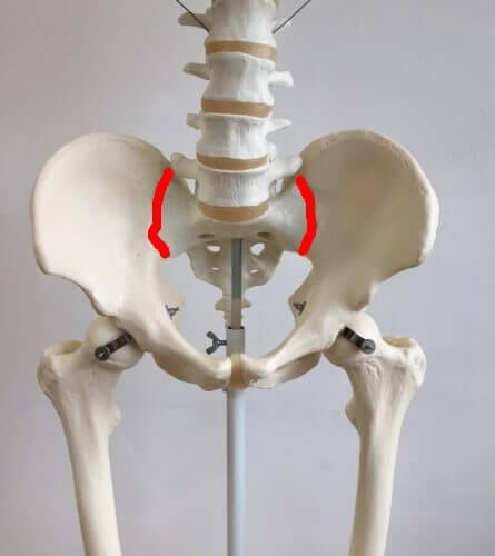 仙腸関節 位置 図 前面