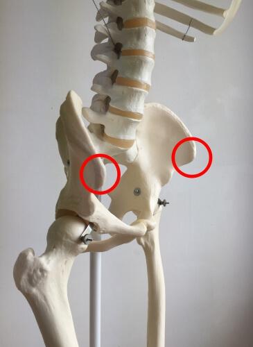 上前腸骨棘 図 横から