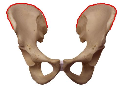 ヤコビー線の位置 図 腸骨稜