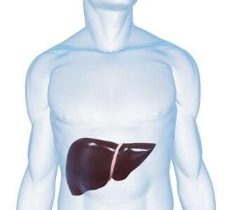 肝臓の痛みの原因とは 背中、お腹どちらが痛む?
