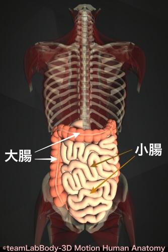 小腸 大腸 病気 一覧表