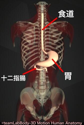 タール便 原因 食道 胃 十二指腸