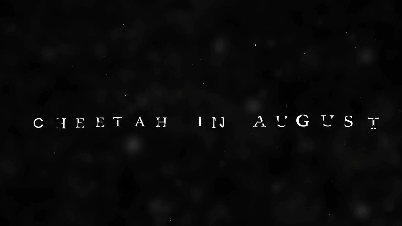 Cheetah In August (Official 2015 Trailer)-4