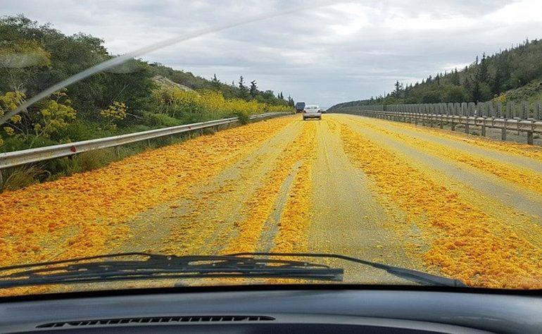 Pomarańcze na autostradzie