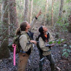 Wetland delineation field crew