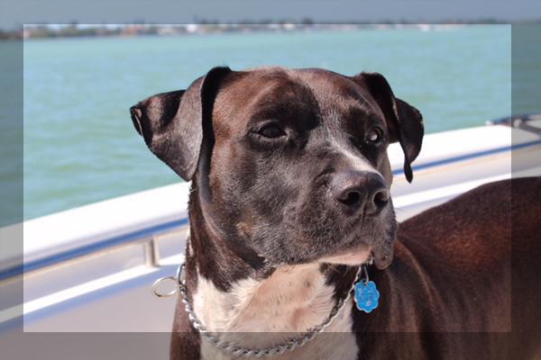 Cypress Creek Assisted Living and Memory Care Respite Care Pet Friendly Senior Living Community Sun City Center, Tampa, Brandon, Valrico, Apollo Beach