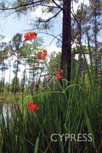 flower environmental engineering