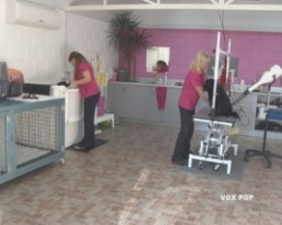 Inside the Hair of the dog salon