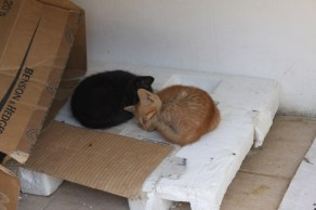 Two friendly village cats snooze out of the mid day sun