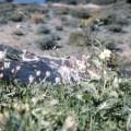Cyprus, wild cyclamen & flowers