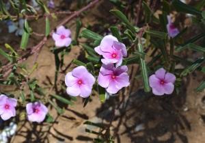 1. Flowers
