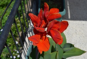3. Flowers
