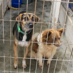The dogs at KAR Rescue Centre need your Help