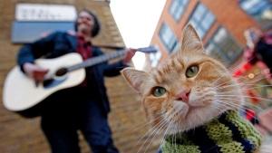Bob the Cat
