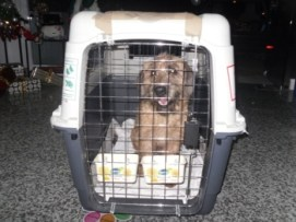 Mustard was all packed and ready to go!! image