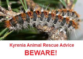 Beware of Processionary Caterpillars in Cyprus