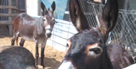 Donkey header