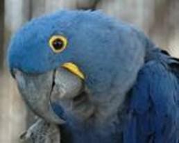Macaw 2