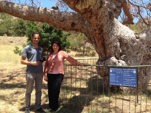 Engin and Hatice next to the ancient tree of Cinarli